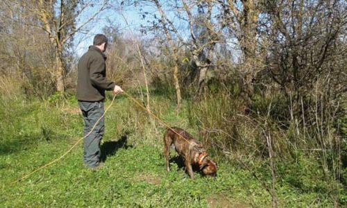 La Selección del perro de caza I