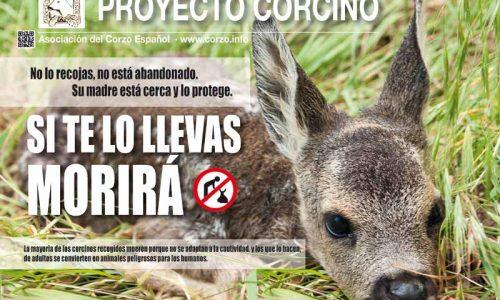 La Asociación del Corzo Español presenta su campaña proyecto corcino 2017