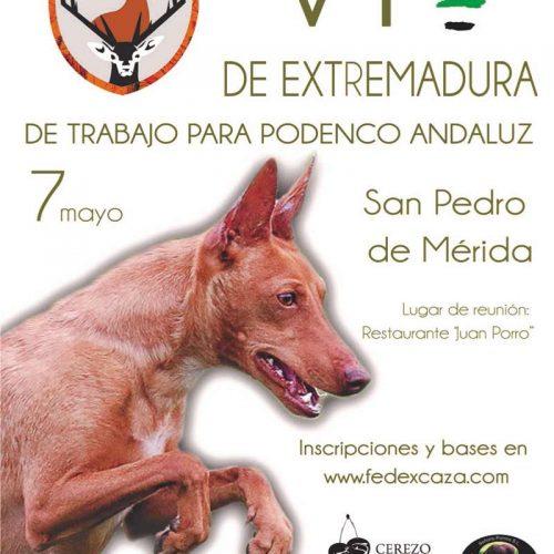 VI Copa de Extremadura de Trabajo para Podenco Andaluz