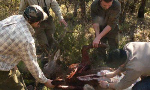 El nuevo decreto SANDACH de Extremadura