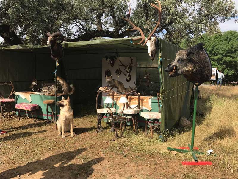 II-encuentro-caza-y-campo-taxidermia