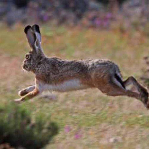 La ONC reclama una PAC compatible con la recuperación de la fauna menor