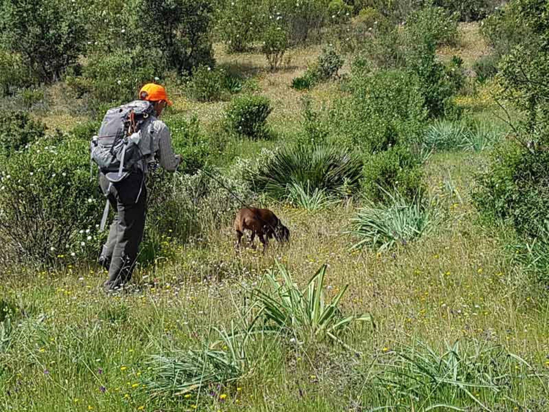 Pruebas de acreditación como conductores de perros de sangre en Andalucía