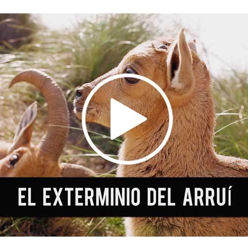 SOS ARRUI RESUMEN