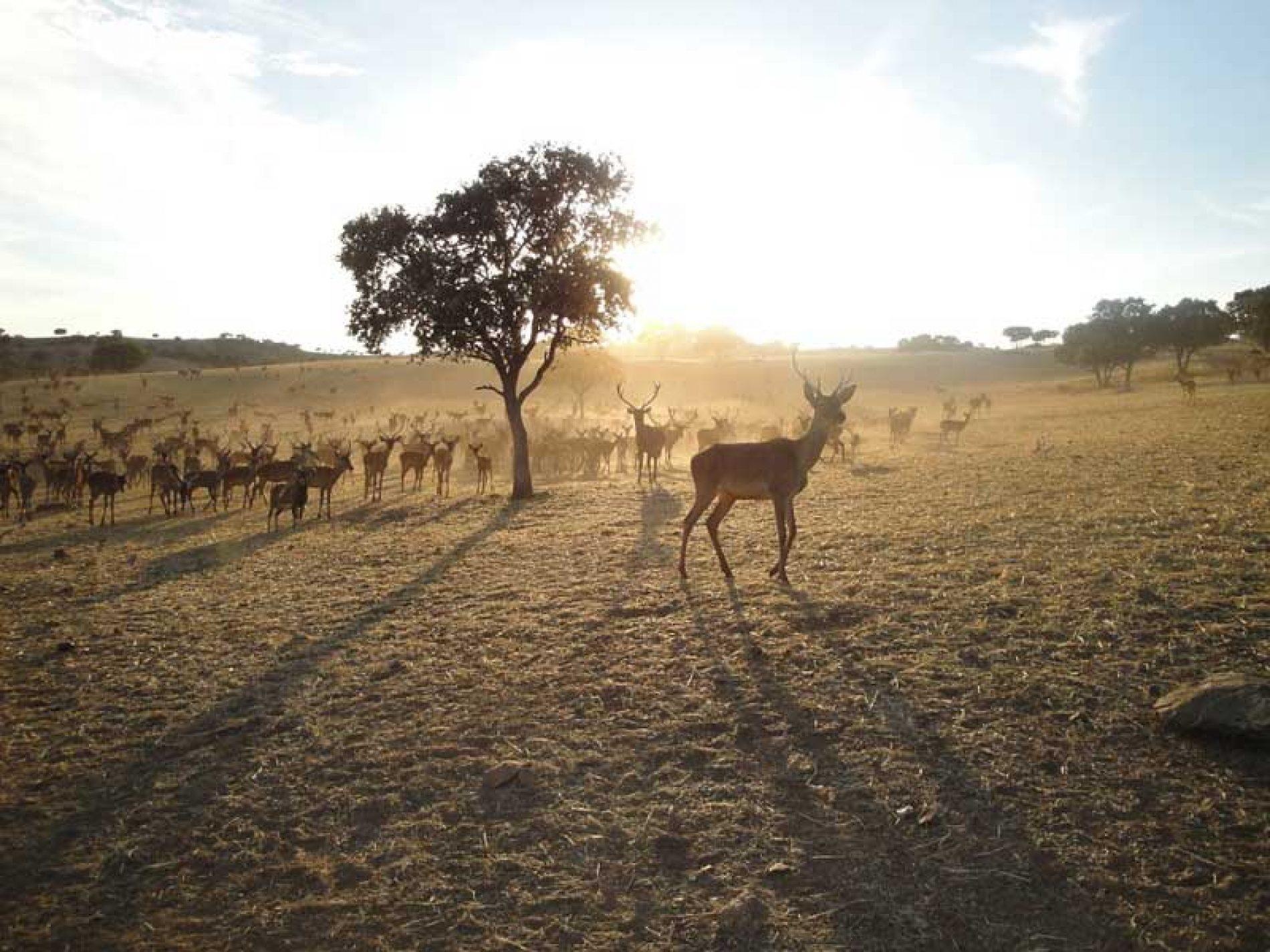 7 ventajas de la caza que los ecologistas no quieren oír