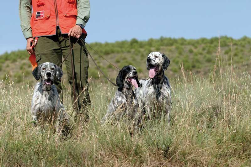 cuidados-perros-verano-entrenamiento