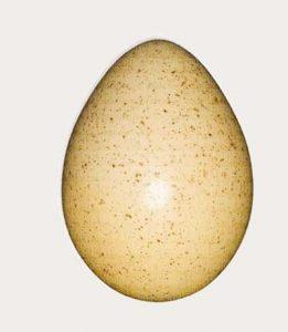huevos-perdiz-chucar