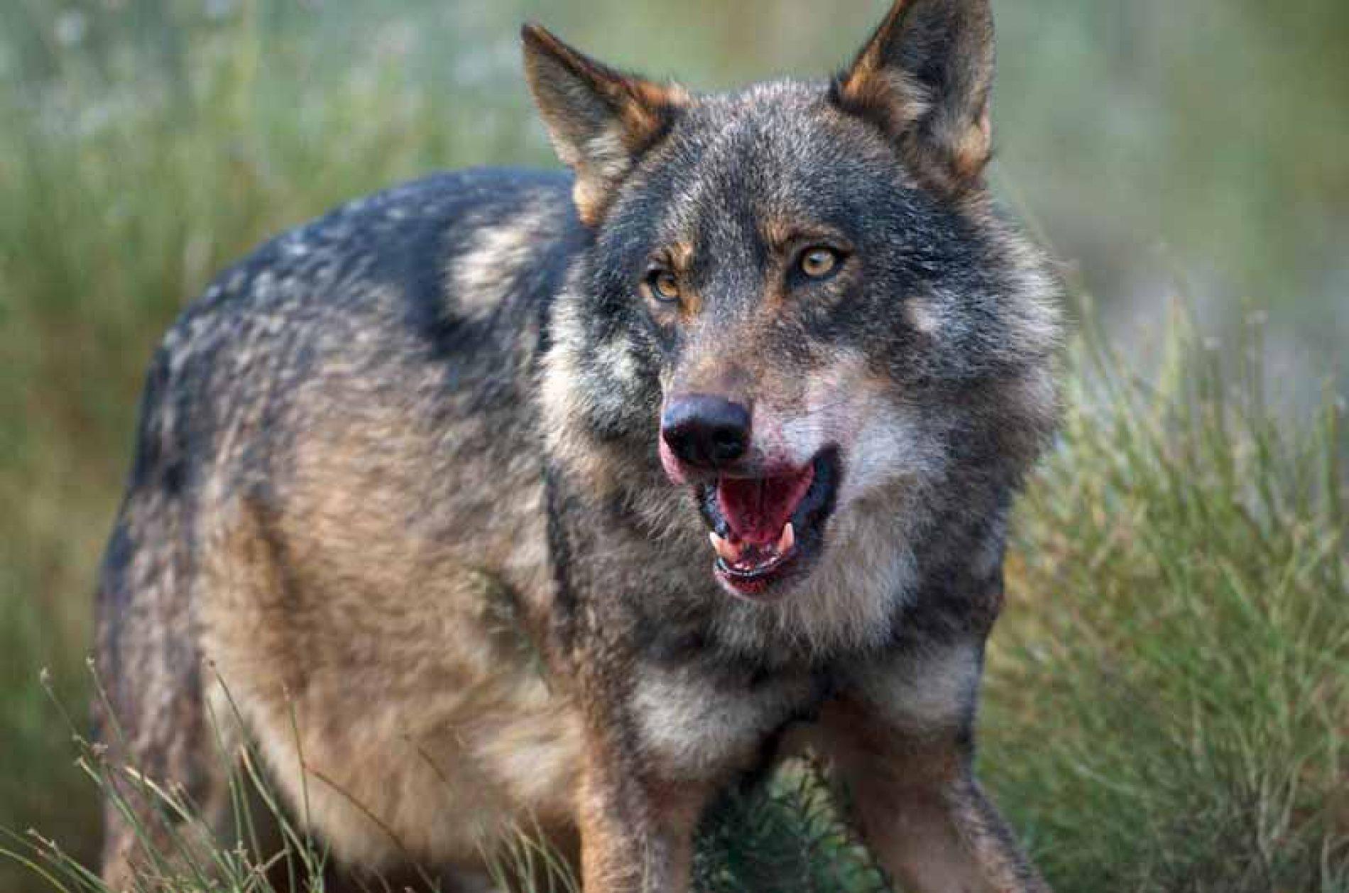 Artemisan emprende acciones penales contra un agente medioambiental que realiza graves acusaciones a cazadores y ganaderos