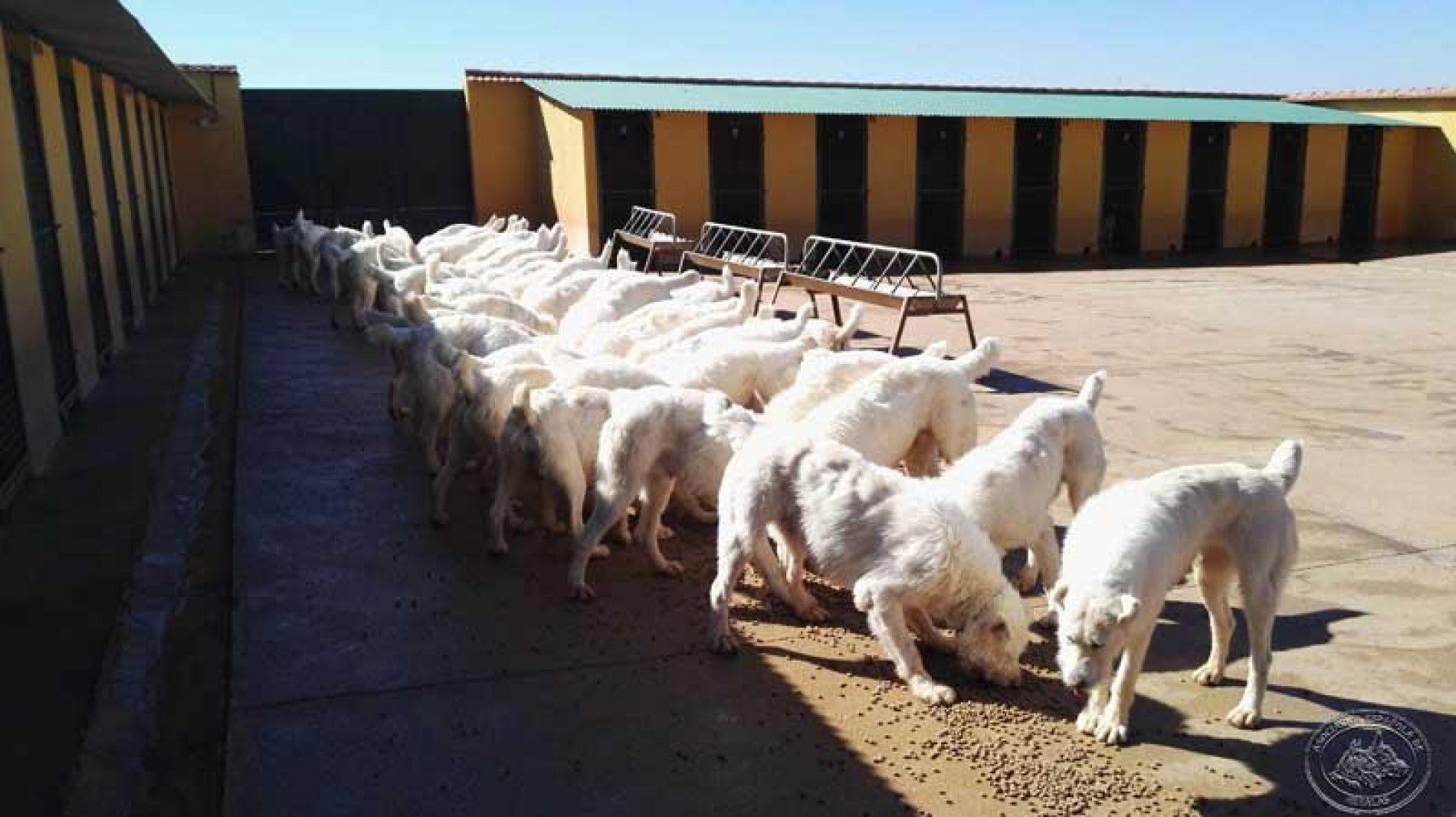 A.E.R. presenta alegaciones a la Ley de Protección Animal de Castilla-La Mancha