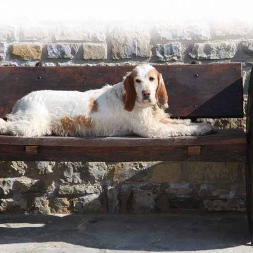La obesidad mental en los perros de caza