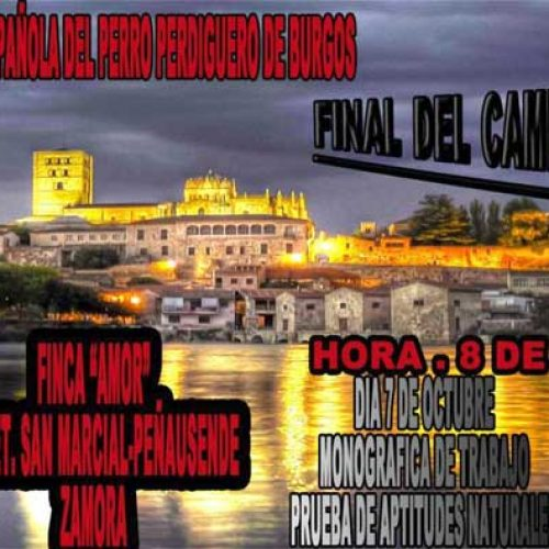 Perdiguero de Burgos, III prueba puntuable para el campeonato de España 2017