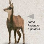 reserva-de-caza-Sarrio