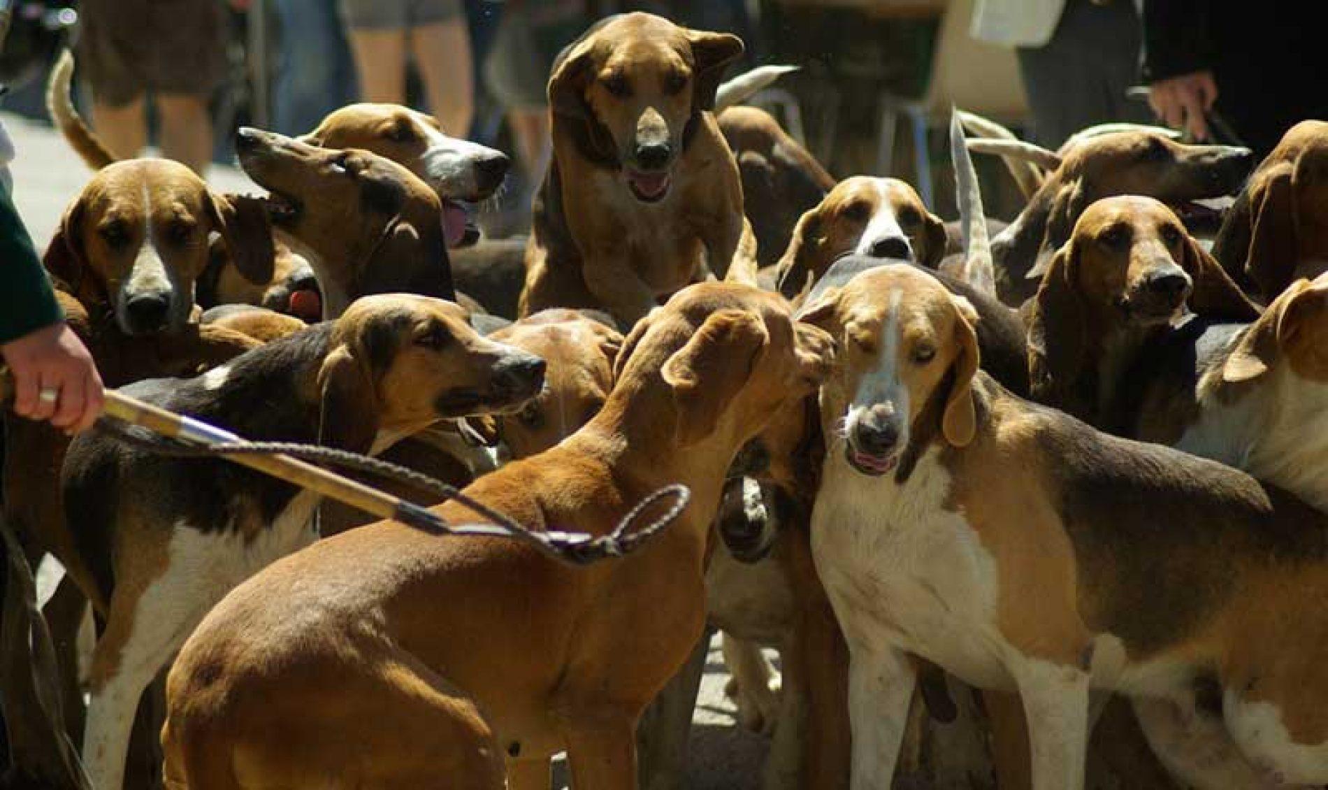 La ONC rechaza el anteproyecto de ley de bienestar animal De Castilla La Mancha