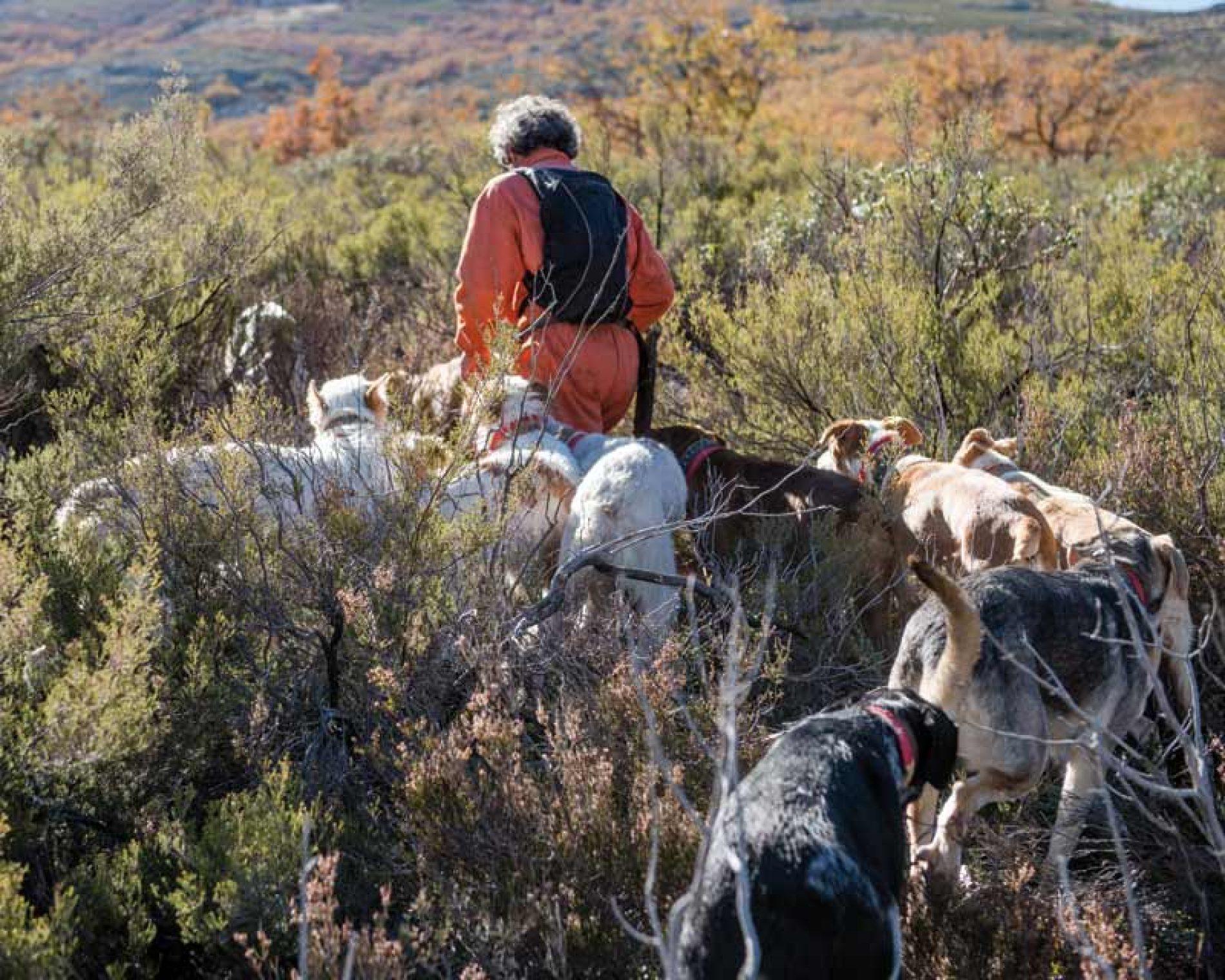 ARRECAL alerta del sesgo ideológico de las iniciativas de la Dirección General de los Derechos los Animales