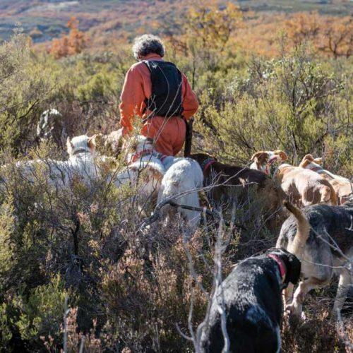 Arrecal denuncia la esterilización de las rehalas propuesta por Castilla La Mancha