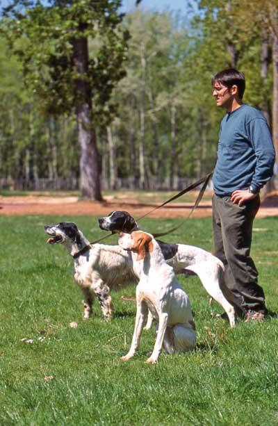 insuficiencia-renal-perro-de-caza-desa