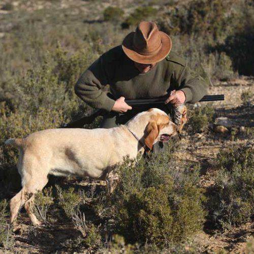 La castración en el perro de caza ventajas e inconvenientes