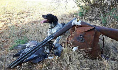 El bretón, sus enfermedades y soluciones veterinarias