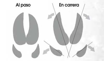 Huellas-y-rastros-jabali-paso