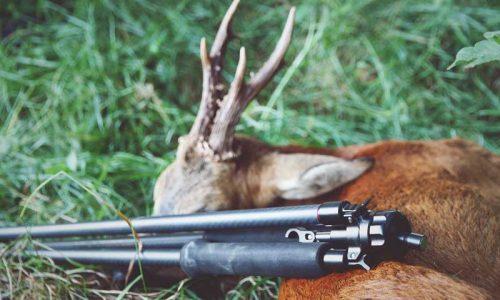 De caza con el trípode Kapita