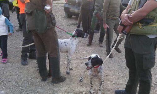 XXVIII Campeonato de Castilla y León de Caza Menor con Perro