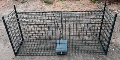 control-predadores-Jaula-para-perros-prohibida