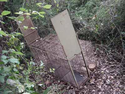 control-predadores-Jaula-trampa-zorros-prohibida