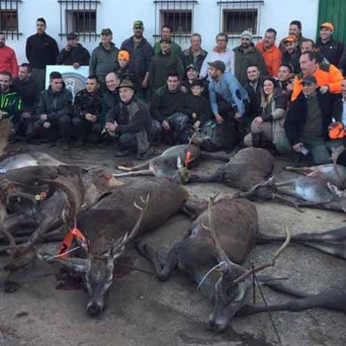 Rehalas incansables y buena caza en la montería El Chaparral
