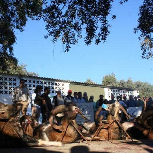 Satisfactoria y divertida montería en Torralba