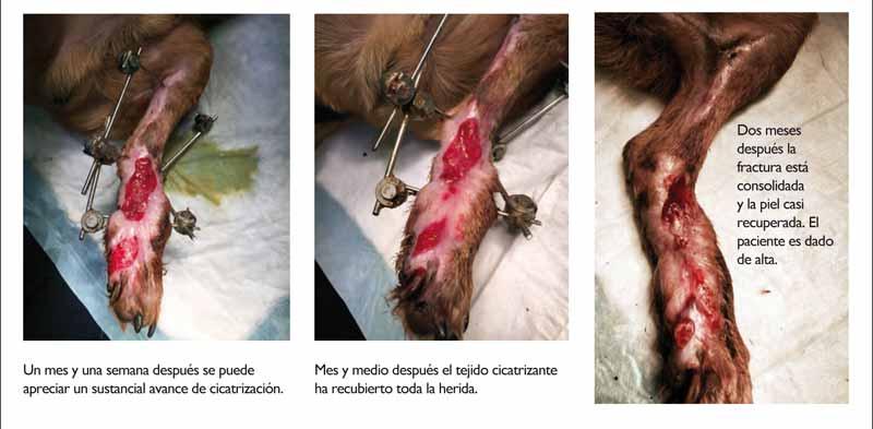 perros-de-caza-traumatismos-revision-2