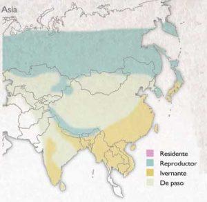distribucion-becadas-asia