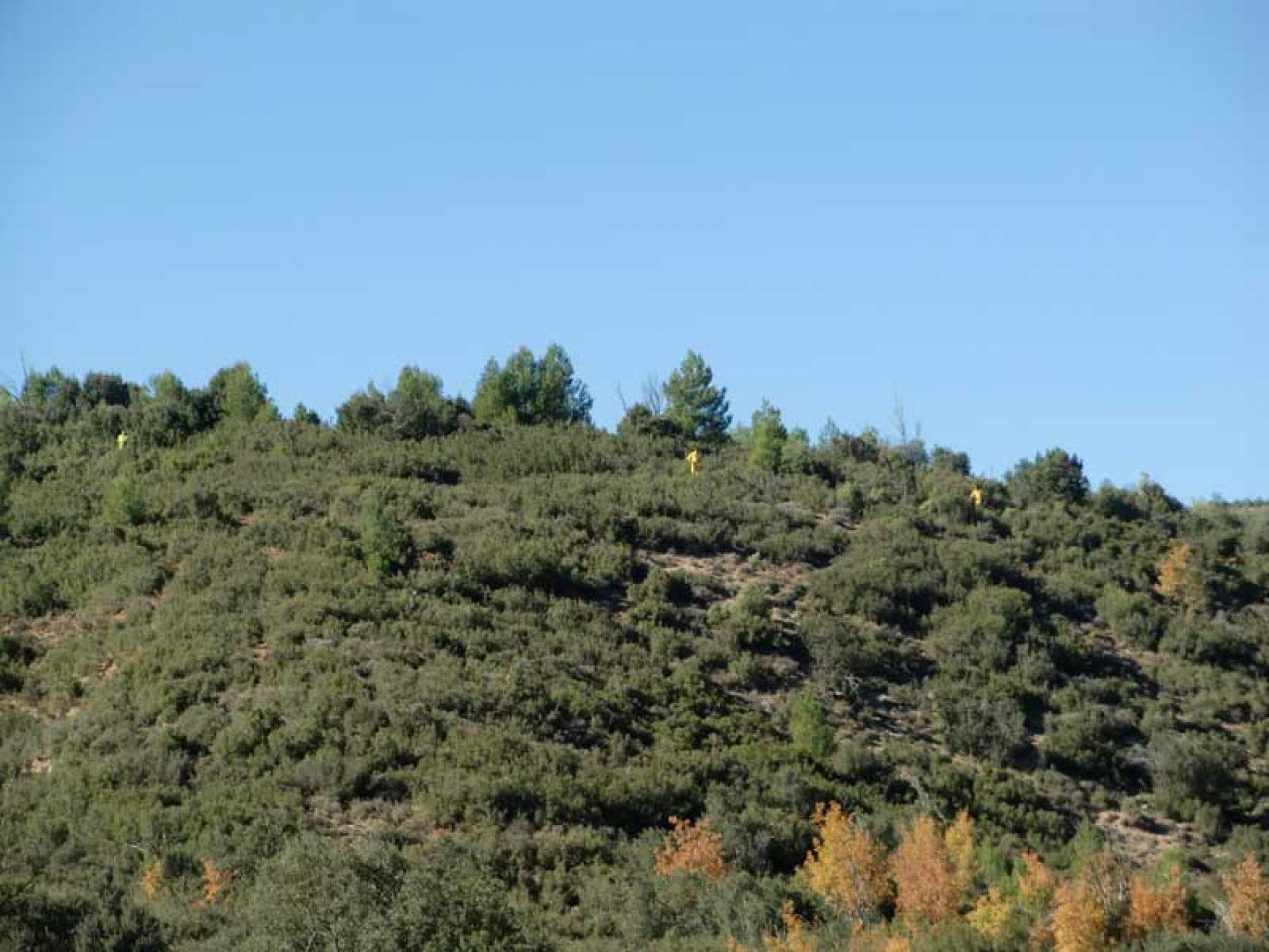 ¿Es la montería española una modalidad necesaria?