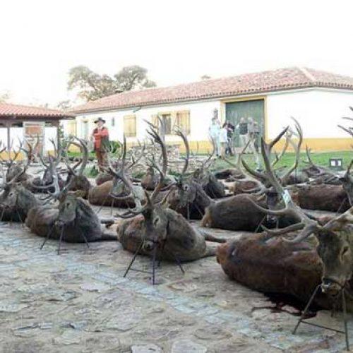 Vigésimo octava montería administrada por Gescaza en La Ribera Alta