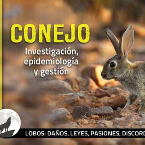 Conejos sí, conejos no
