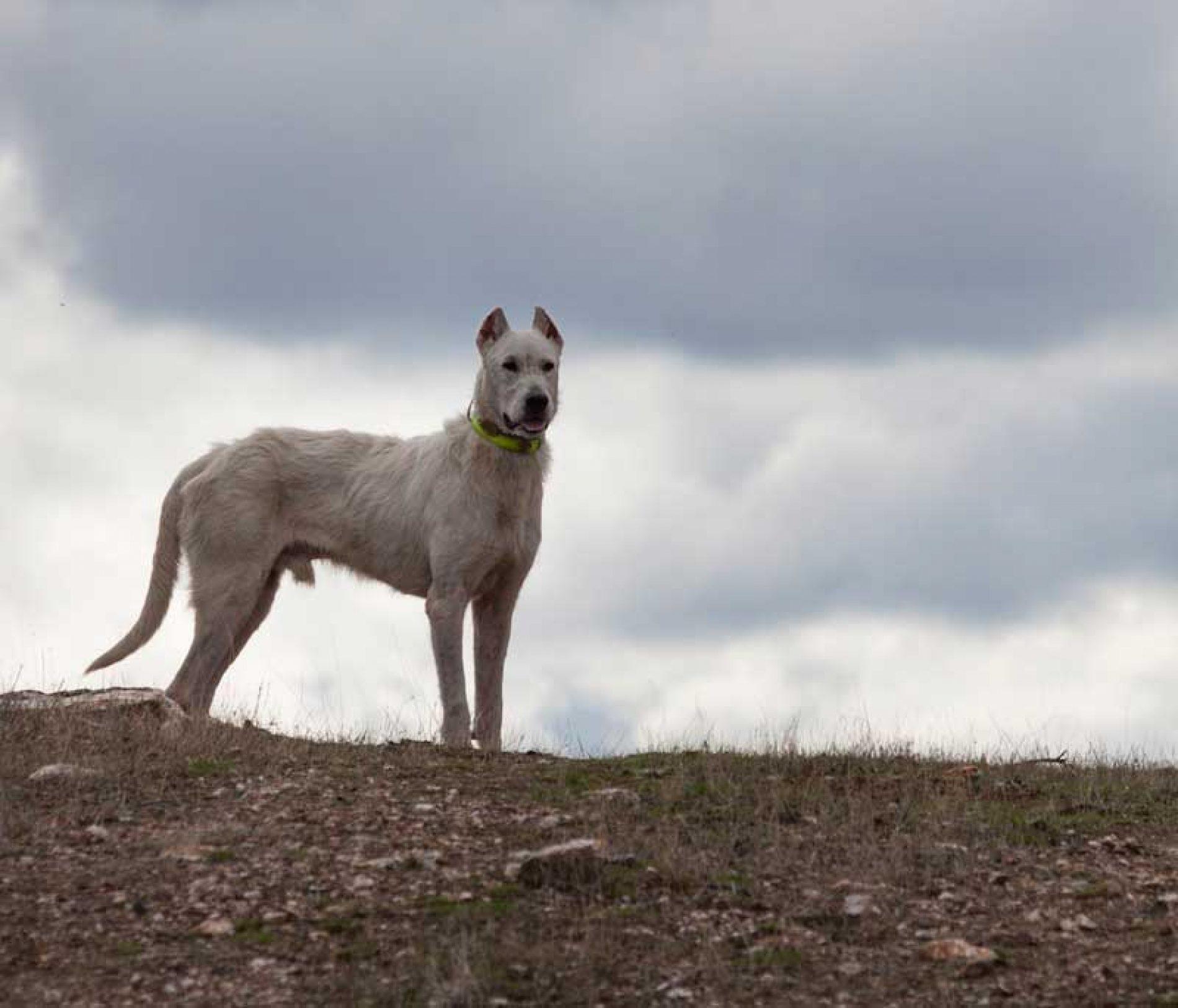 Novedades en materia de desparasitaci n de perros de caza - Novedades para mascotas ...