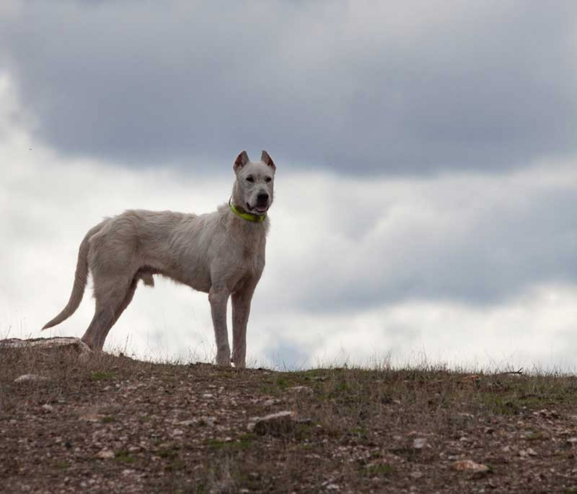 Novedades en materia de desparasitación de perros de caza en Extremadura