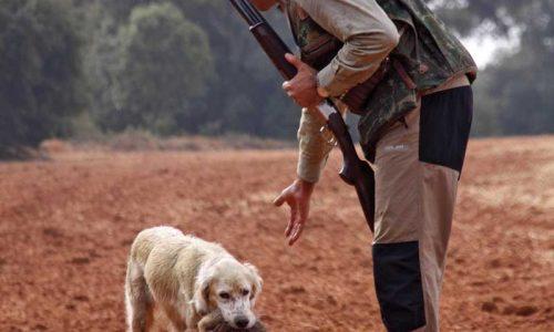 Daños a la agricultura por la fauna salvaje