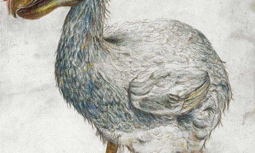 Crónica de la extinción de 3 parientes de las palomas