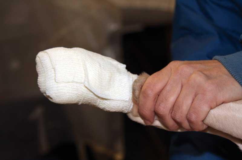 lesiones-en-almohadillas-vendaje