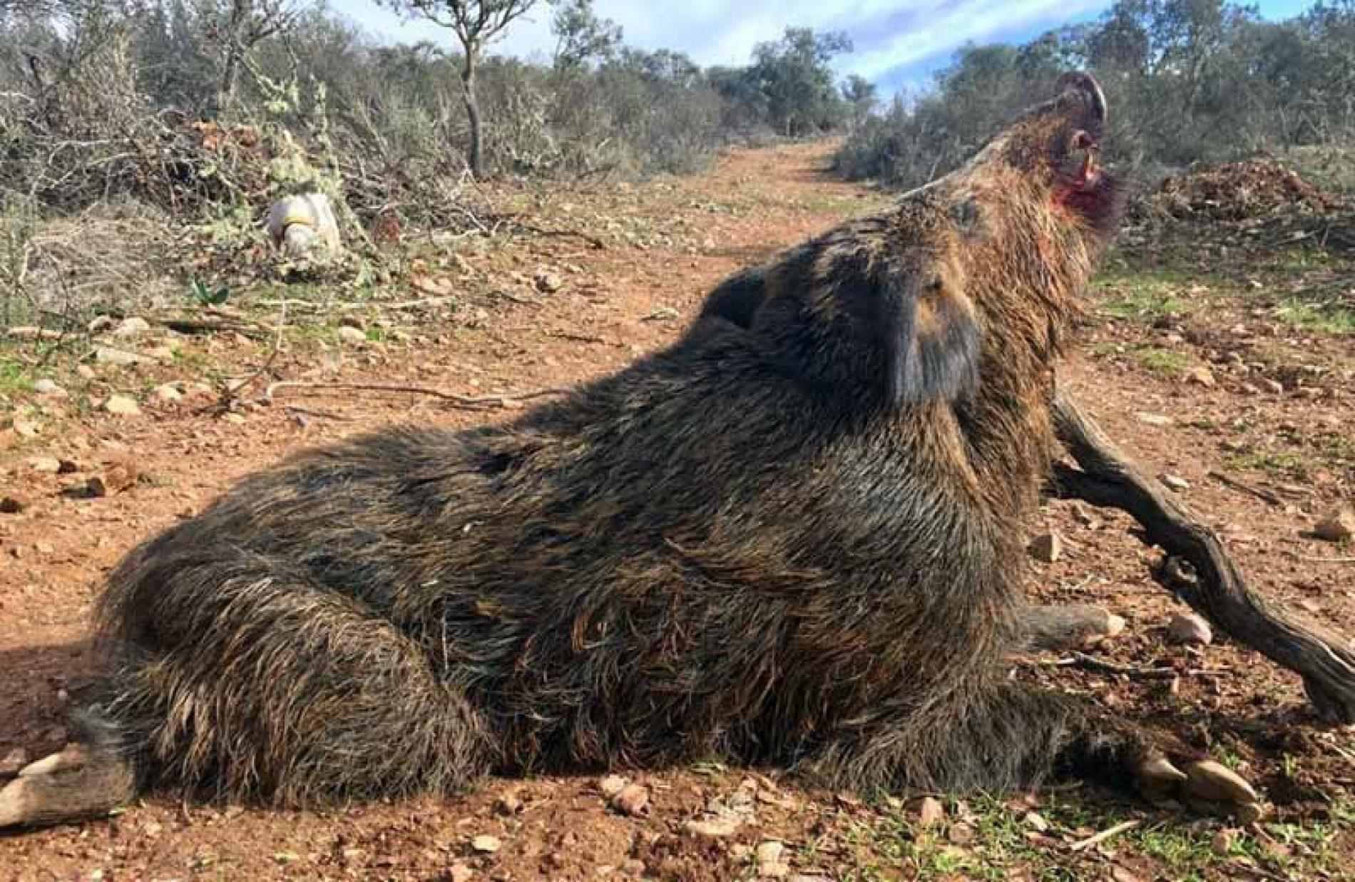 48 monteros disfrutaron en la montería Las Porqueras