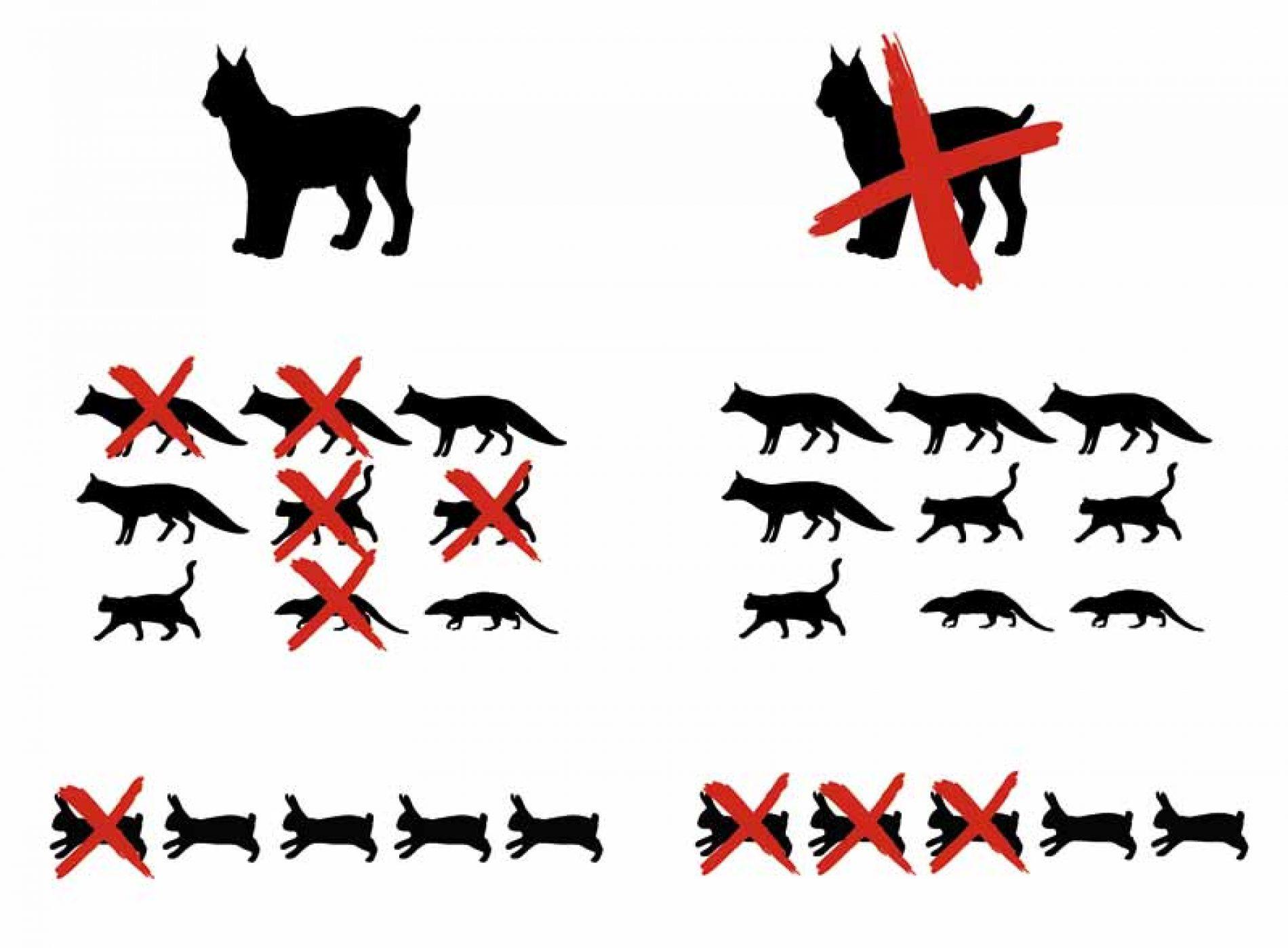 El equilibrio natural, predadores, superdepradores, mesodepradores
