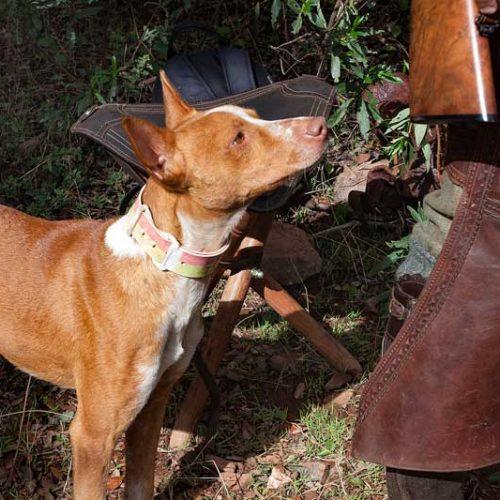 La Junta trabaja en el cambio de la norma de desparasitación de perros de caza