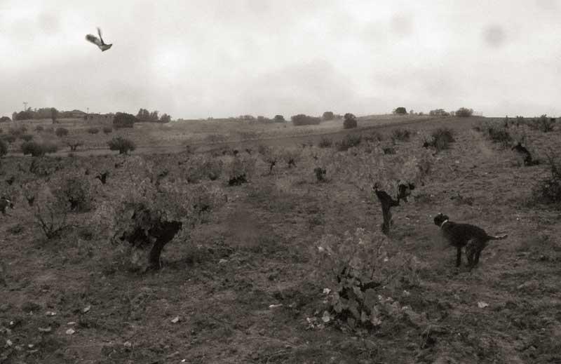 caza-sostenible-prin
