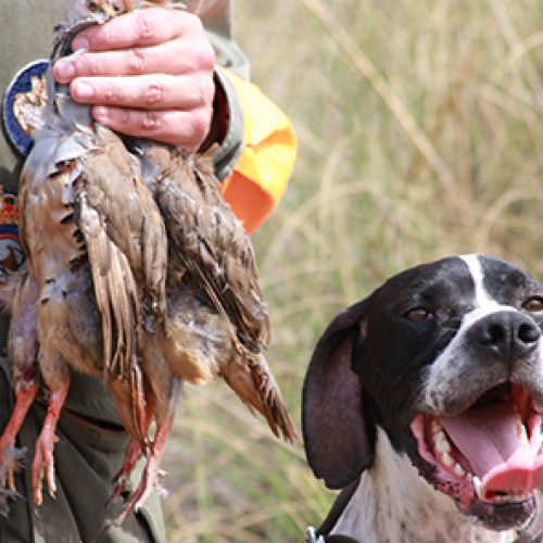 El Gobierno de Rajoy confirma su apoyo al sector de la caza y la pesca