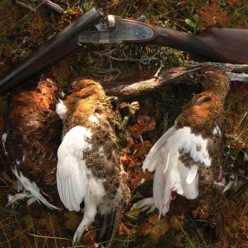 Características, distribución y caza del Lagópodo común