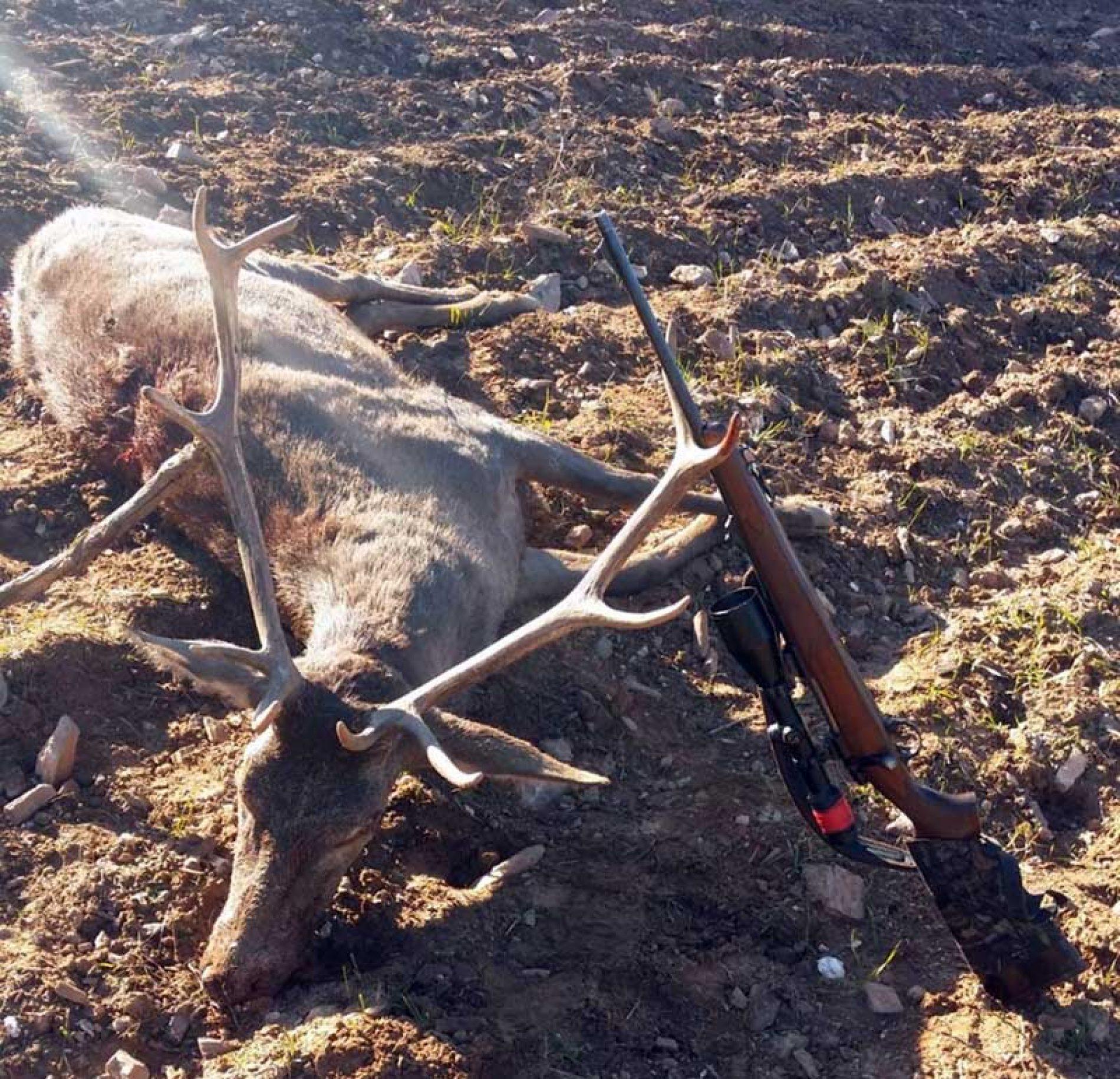 Muchos disparos fallados en la montería El Corcho