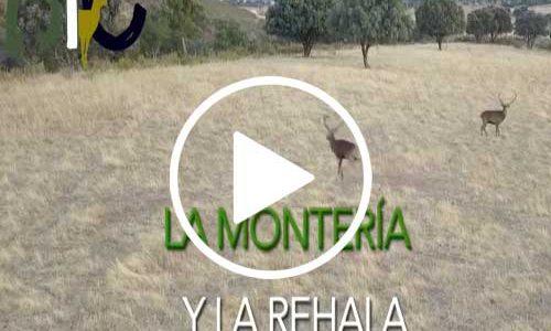 Declaración de la rehala y la montería como Bien de Interés Cultural de Extremadura