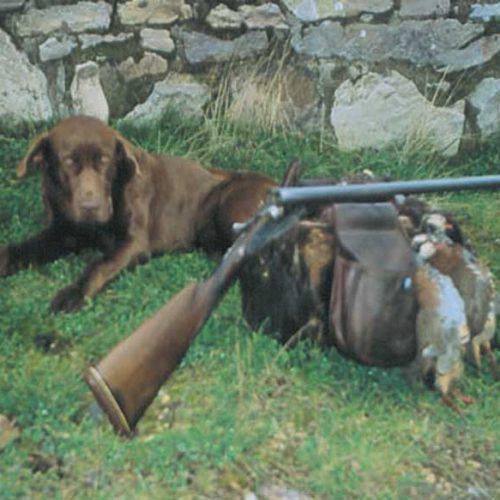 Experiencia de caza de perdiz en estado natural