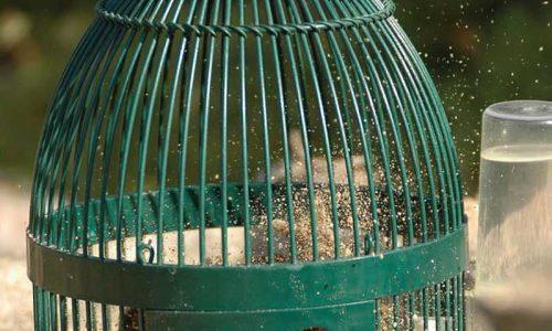 Consejos para un buen pelecho de nuestros reclamos y cómo recortar sus plumas