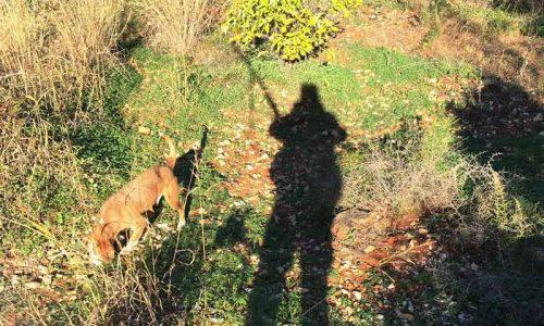"""ADECACOVA cree demagógico que la Federación ponga a los cazadores al frente de """"su"""" torneo de tiro al pichón"""